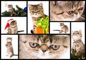 Kitten — 图库照片