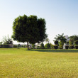 Tree in a park — Stockfoto