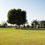 árbol en un parque — Foto de Stock