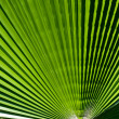 Palm leaf - Lizenzfreies Foto