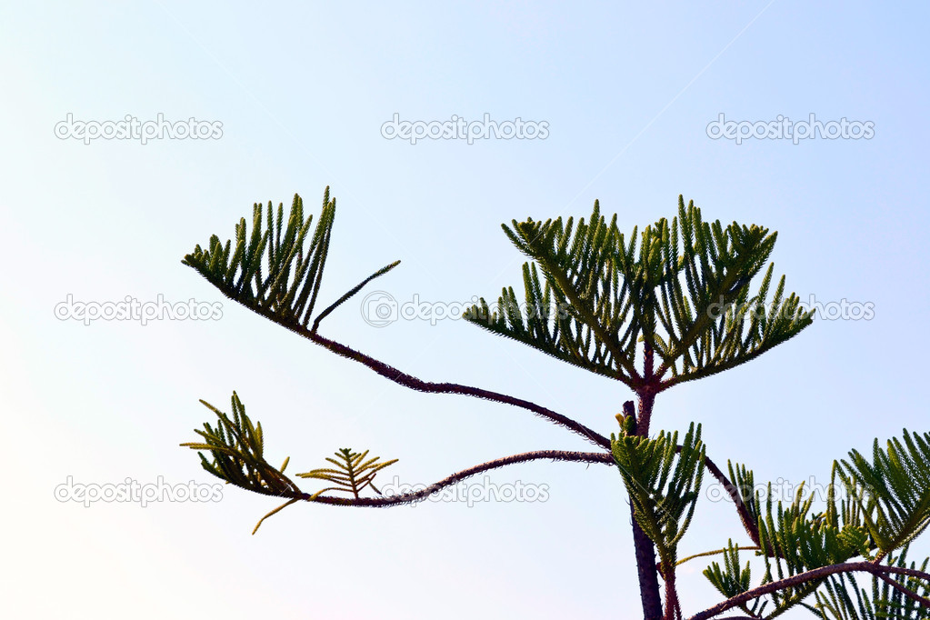 Interesting branch of a tree against clean sky — Foto de Stock   #7392250