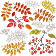 Collection abstract autumn element — Stock Vector