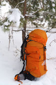 Backpack in snowy pine wood — Stock Photo