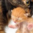 Mother cat carrying newborn kitten — Stock Photo #7414366
