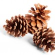Pine cones — Stock Photo #7515692