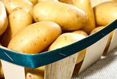 Fresh tasty potatoes — Stock Photo