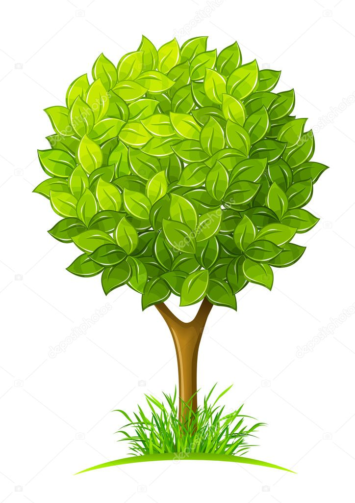 Tree with green leaves vector illustration isolated on white background — Stock Vector #11177574