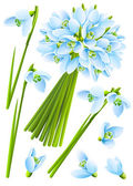 Spring snowdrop flowers — Stock Vector