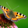 Butterfly sits on a flower — Stock Photo #6996022