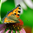 Stock Photo: Butterfly sits on a flower