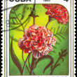 CUBA - CIRCA 1985 Carnations — Stock Photo