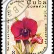 CUBA - CIRCA 1986 Dendrobium — Stock Photo