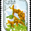CUBA - CIRCA 1986 Tecomaria - Stock Photo