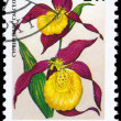 HUNGARY - CIRCA 1987 Cypripedium — Stock Photo