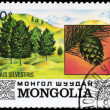 MONGOLIA - CIRCA 1982 Pine — Stock Photo