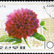 NORTH KOREA - CIRCA 1976 Dahlia — Stock Photo