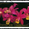 Royalty-Free Stock Photo: NORTH KOREA - CIRCA 1984 Cattleya