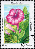 AFGHANISTAN - CIRCA 1985 Mirabilis — Stock Photo