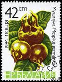 BULGARIA - CIRCA 1984 Medlars — Stock Photo