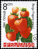 BULGARIA - CIRCA 1984 Strawberries — Stock Photo