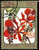 古巴-大约在 1984年凤凰木 — 图库照片