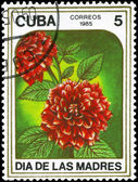 CUBA - CIRCA 1985 Dahlias — Stock Photo