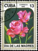 CUBA - CIRCA 1985 Roses — Stock Photo
