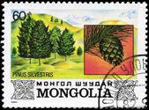 MONGOLIA - CIRCA 1982 Pine — Stock Photo