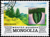 MONGOLIA - CIRCA 1982 Spruce — Stock Photo