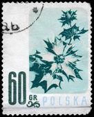 POLAND - CIRCA 1957 Sea Holly — Stock Photo