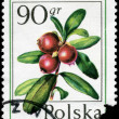 POLAND - CIRCA 1977 Cowberry — Stock Photo