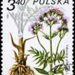 POLAND - CIRCA 1980 Valerian - Stock Photo