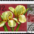 USSR - CIRCA 1978 Iris — Stock Photo