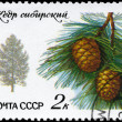 USSR - CIRCA 1980 Pine - Stock Photo