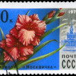 USSR - CIRCA 1978 Gladiolus — Stock Photo
