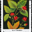 Stock Photo: USSR - CIRC1982 Stone Bramble
