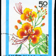 VIETNAM - CIRCA 1984 Caesalpinia — Stock Photo