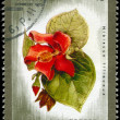 CUBA - CIRCA 1975 Hibiscus — Stock Photo