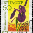 USSR - CIRCA 1960 Iris — Stock Photo