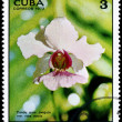 CUBA - CIRCA 1973 Vanda — Stock Photo