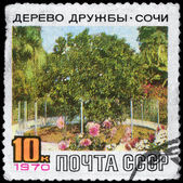 USSR - CIRCA 1970 Friendship Tree — Stock Photo