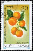 VIETNAM - CIRCA 1981 Kumquat — Stock Photo