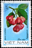 VIETNAM - CIRCA 1981 Syzygium — Stock Photo