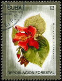 Cuba - circa 1975 hibisco — Foto de Stock