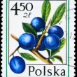 POLAND - CIRCA 1977 Sloe — Stock Photo