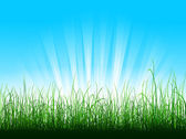 Green grass over blue sky with sunbeams — Stock Vector