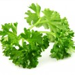 Twig of parsley — Stock Photo