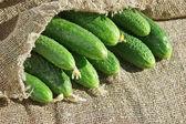 Ripe cucumber in garden — Stock Photo