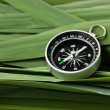 Compass on  leaves of cane — Stok fotoğraf