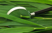 Magnifying glass on leaves of cane — Stock Photo